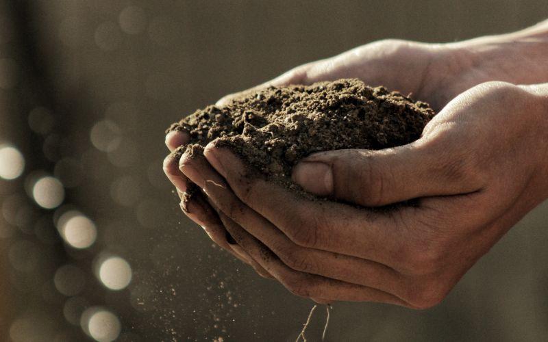 Hlina na rukách pri sadení
